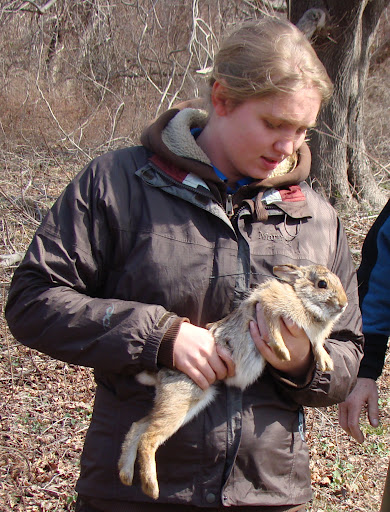 Cyndi Maynard, University of Rhode Island, helping release cottontails on Patience Island at the end of March. Credit: Lou Perrotti