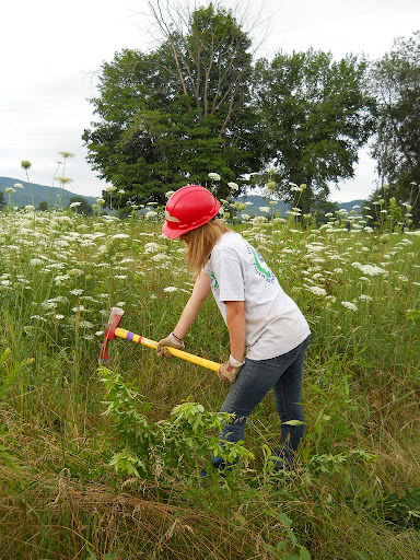 Partners like this Youth Conservation Corps member help the U.S. Fish and Wildlife Service control invasive multi-flora rose.