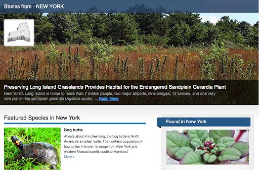 Here's the New York page, which features the sandplain gerardia plant, the bog turtle, and the Chittenango ovate amber snail, among others.