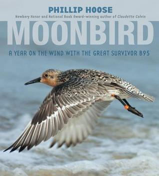 The legendary red knot, known as B95, has even been the subject of a book.