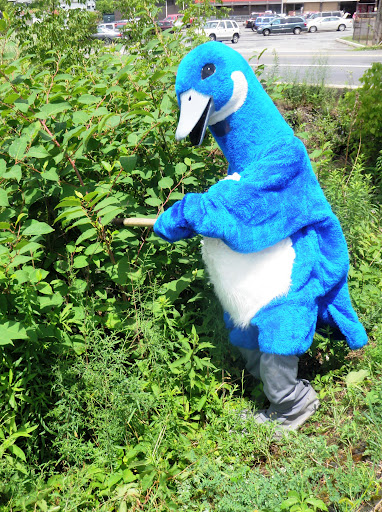 Puddles cutting a stem of Japanese knotweed. Credit: USFWS