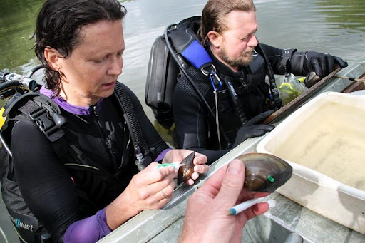 Biologists Patty Morrison and Craig Zievis from Ohio River Islands NWR tagging mussels off the Missisquoi River. Credit: Ken Sturm, Missisquoi NWR manager