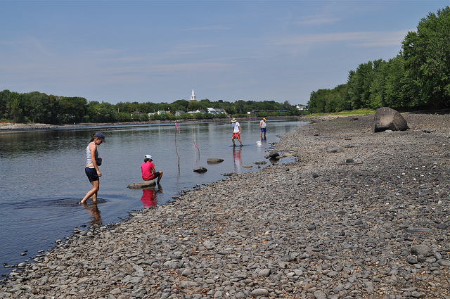 Looking for freshwater mussels. Credit: Cheryl Daigle/Trust