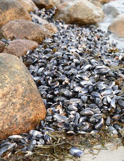Mussels image from NOAA Mussel Watch Program.