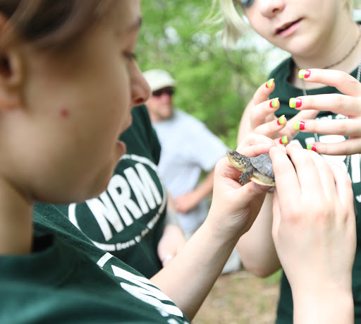 One last check on a Blanding's turtle before release. Credit: Keith Shannon/USFWS