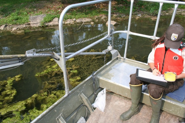 Biological science technician Kelly McDonald recording GPS coordinates of hydrilla, which can be seen just below the boom arm of the electrofisher. Credit: USFWS