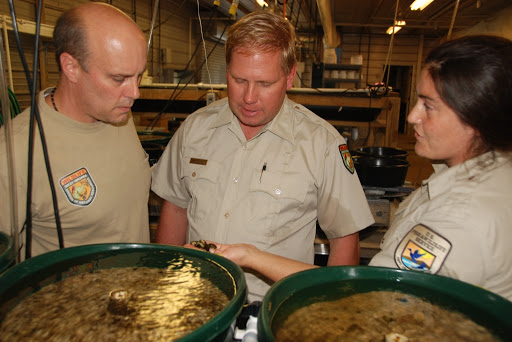 West Virginia and U.S. Fish and Wildlife Service biologists check the mussels at the hatchery. Credit: Craig Stihler/WVDNR