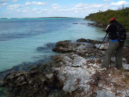 Sue Abbott, Bird Studies Canada, scanning for birds at Berry Islands. Credit: Caleb Spiegel/USFWS