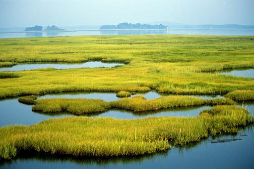 Coastal Wetlands at Parker River National Wildlife Refuge in Newburyport, MA. Credit: Kelly Fike/USFWS.