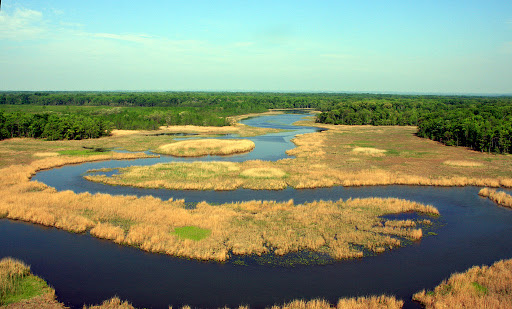 The Chesapeake Bay watershed protects land for many species, including this important  bald eagle habitat near Aberdeen Proving Ground. Credit: Leo Miranda/USFWS