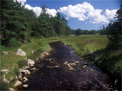 A stream flows by tall trees in a Maine wetland on a sunny day.  Credit: Ralph Tiner/USFWS