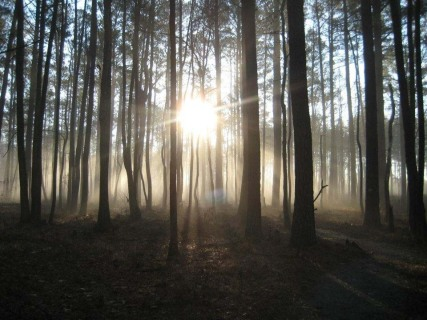 A foggy morning at Great Dismal Swamp National Wildlife Refuge.