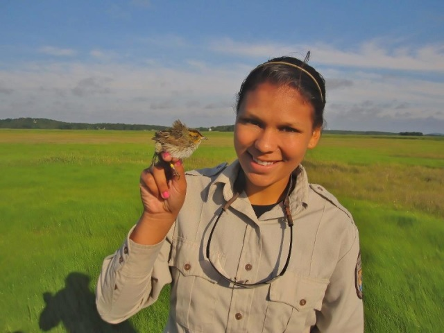 During her position at Parker River National Wildlife Refuge in Massachusetts, Megan helped the biology staff in mist-netting saltmarsh sparrows. Credit: USFWS