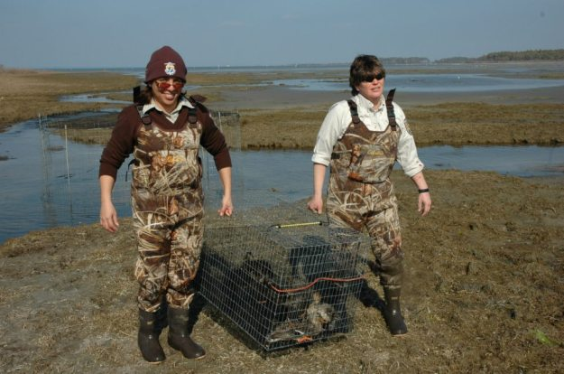 Today you're hearing from Emarie Ayala-Diaz, wildlife biologist from Chincoteague National Wildlife Refuge on the coast of Virginia. Credit: USFWS