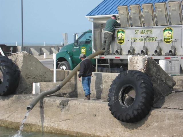Two men stock fish into Lake Erie using a large hose attached to a truck.