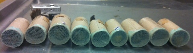 Marlon Errol Hariram was caught coming in to New York from Guyana with the sleeves of his shirt hiding  finches hidden in these toilet paper tubes. Credit: USFWS
