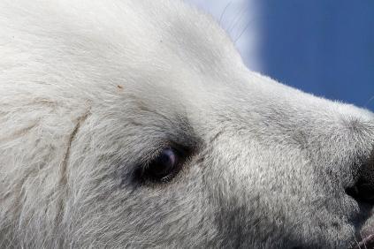 Photo credit: John Gomes/Alaska Zoo