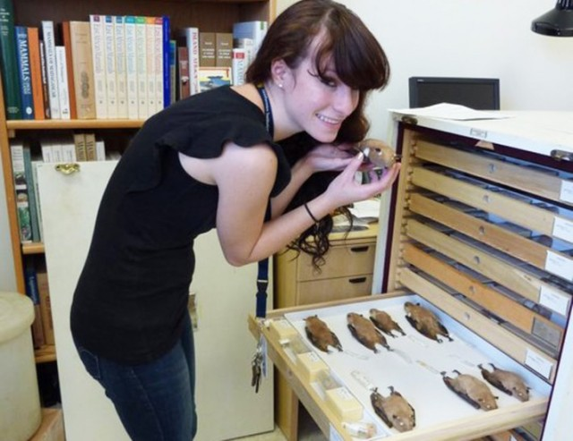 Marissa curating Epomophorus (a genus of bat) specimens at the Smithsonian National Museum of Natural History in summer 2011. Photo courtesy of Marissa.