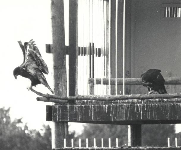 Photo from eagle hacking project