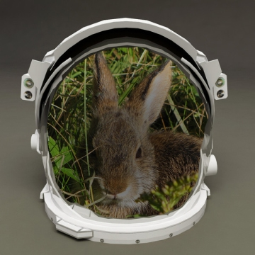 Bunny astronaut