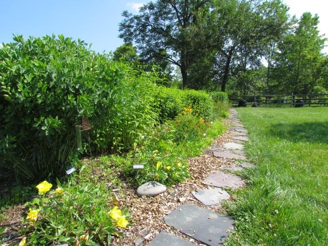 Pollinator Garden 6