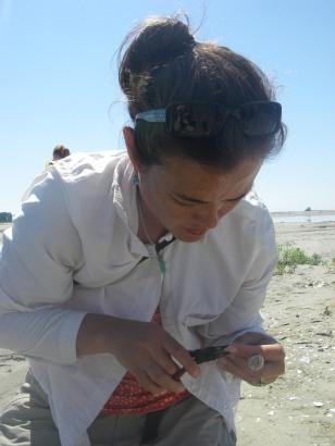 Di banding a least tern chick.