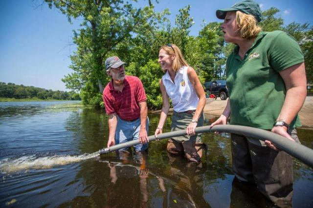 Joining forces in the charles river to bring back shad for Mass fish stocking