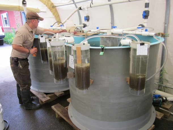 A man sthands next to a tank the size of a hot tub with egg cylinders hanging around it.