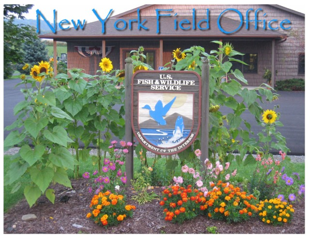 New York Field Office sign and building