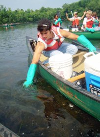 A YCC crew member pulls invasive water chestnut at Assabet River National Wildlife Refuge.