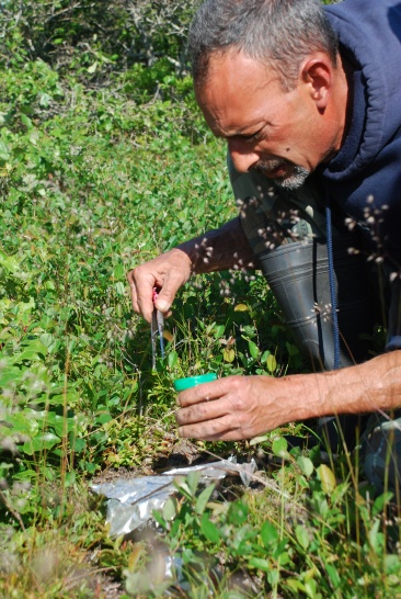 Lou Perrotti, director of conservation programs at Roger Williams Park Zoo, prepares food for the beetles on Nantucket. Credit: Anne McDonough