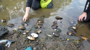 Arranging the mussels by species