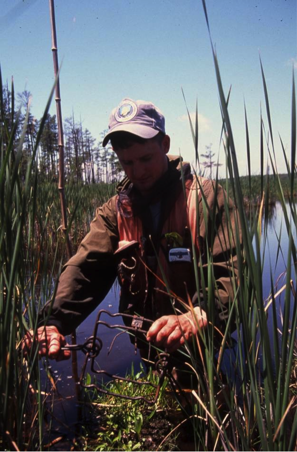 A USDA wildlife specialist setting a nutria trap. Credit: Steve Kendrot, USDA-APHIS Wildlife Services