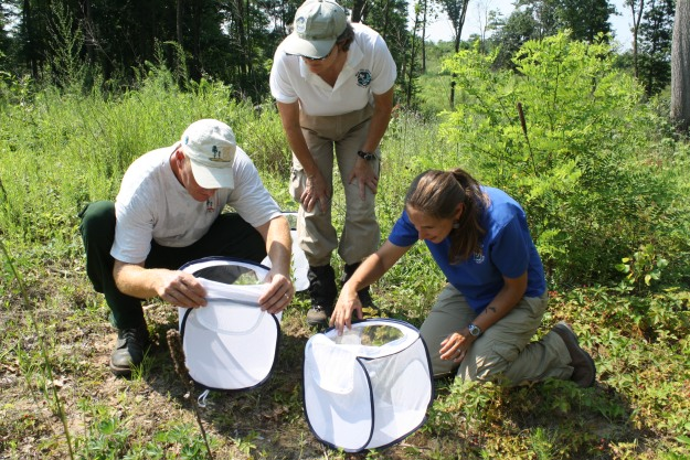 The butterflies are carried in these white mesh containers. Neil Gifford, Kathy O'Brien and Robyn Niver prepare to release butterflies in one of the preserve's habitat restoration areas. Credit: USFWS
