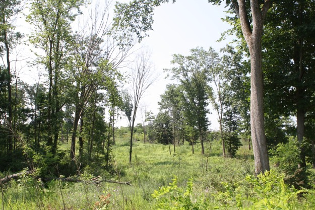 """""""Picture a wide open landscape filled with dense shrubs, scattered pitch pines, openings of prairie grass and wildflowers all rooted in sweeping sand dunes."""" This is the Albany Pine Bush Preserve. Credit: USFWS"""
