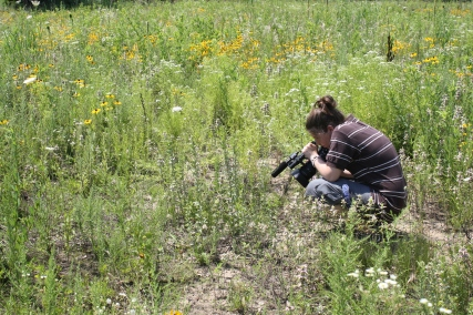 Beth Decker captures footage of a recently released endangered Karner blue butterfly. Credit: USFWS