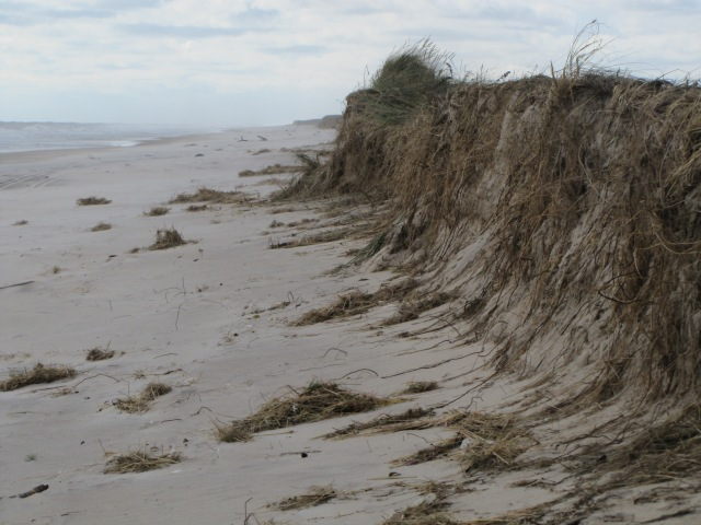 Dunes, beaches and tidal marshes provide a natural defense against coastal flooding and storm surge. CREDIT: USFWS