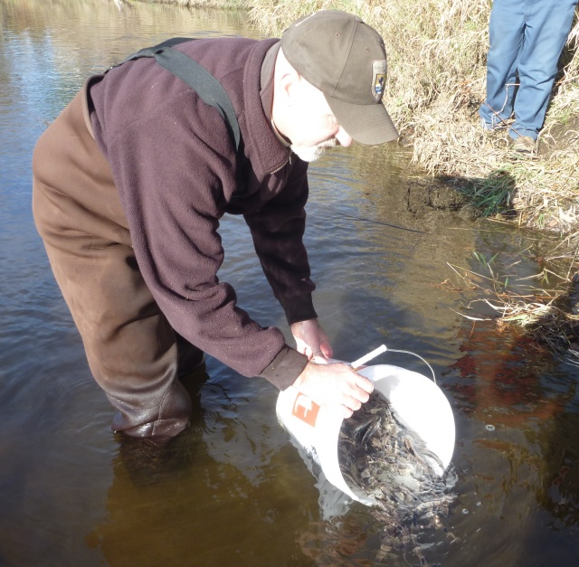 Biologist Scott Schlueter releasing juvenile lake sturgeon that were raised at the U.S. Fish and Wildlife Genoa National Fish Hatchery in Wisconsin. Credit: USFWS