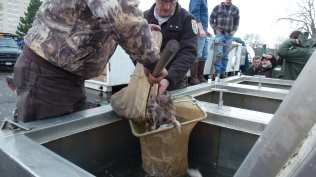 Transferring about 3,000 fish from the Service's truck to the NYSDEC truck. Credit: USFWS