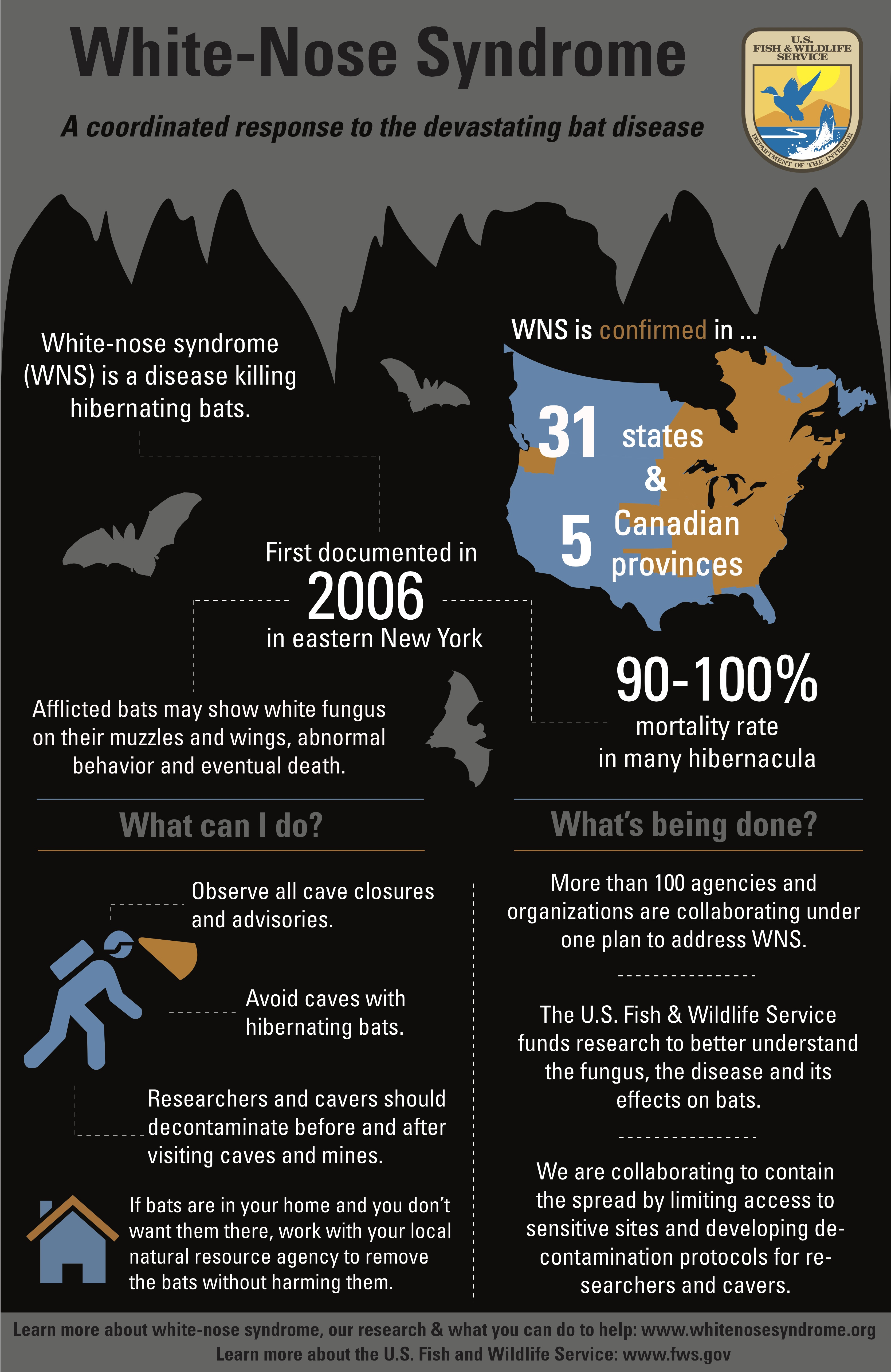 white nose syndrome research paper White nose syndrome is known to affect all six species of hibernating bats that occur in the northeastern us and has recently been confirmed in three other species — making the total number of species affected at nine.