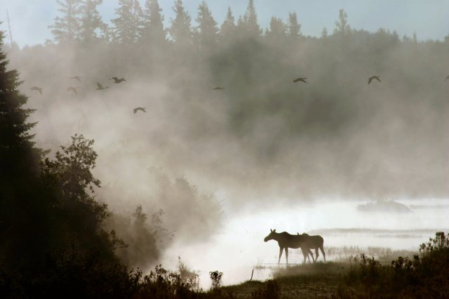 A photo from Aroostook National Wildlife Refuge in northern Maine, where Darrell was stationed. Credit: Sharon Wallace
