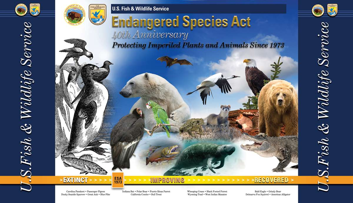 endangered species protection act Endangered species and wildlife protection - environmental the endangered species act (esa), perhaps the most stringent and unyielding of all environmental statutes, frequently has been used as a tool to stop or impede major federal and private projects.