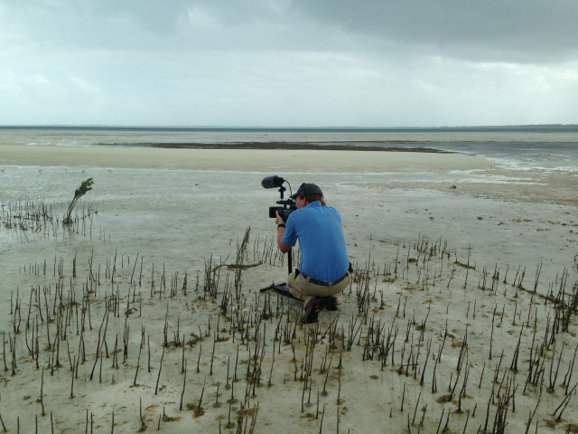 "Videographer Matt McCoy of Loggerhead Productions ""stalking"" piping plovers. Photo from Conserve Wildlife Foundation of New Jersey."