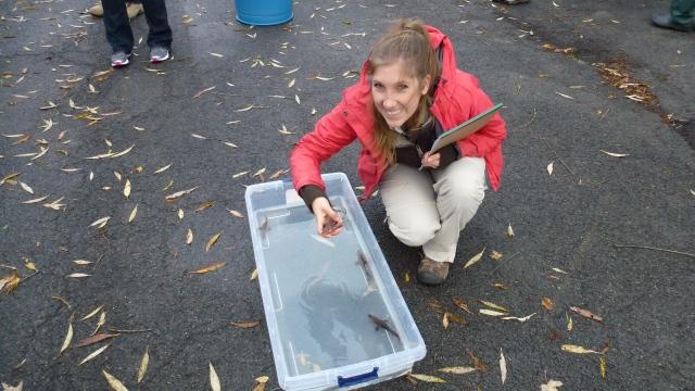 That's me holding a juvenile lake sturgeon. Here's my post about it. Credit: USFWS https://usfwsnortheast.wordpress.com/2013/10/30/sturgeon-stocking-success/