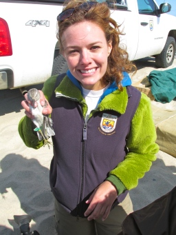 I'm Meagan Racey, and I work in our Northeast Region office for communications. Here I'm holding a red knot, an incredible bird for which we proposed Endangered Species Act protection earlier this year. Credit: USFWS