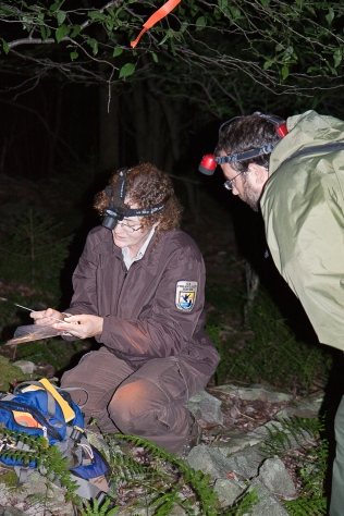 Marquette Crockett, refuge wildlife biologist, during a night survey to capture Cheat Mountain salamanders. The data is used to determine the population on the refuge. Credit: Kent Mason