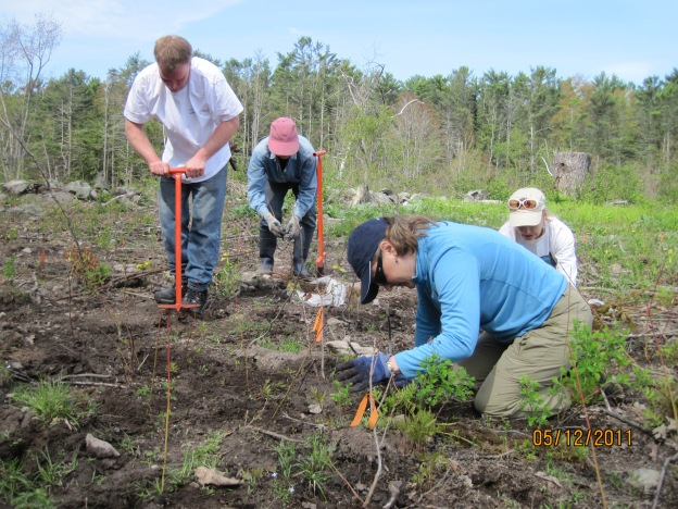 A planting effort on the Cutts Island Forest Management Unit of Rachel Carson National Wildlife Refuge.
