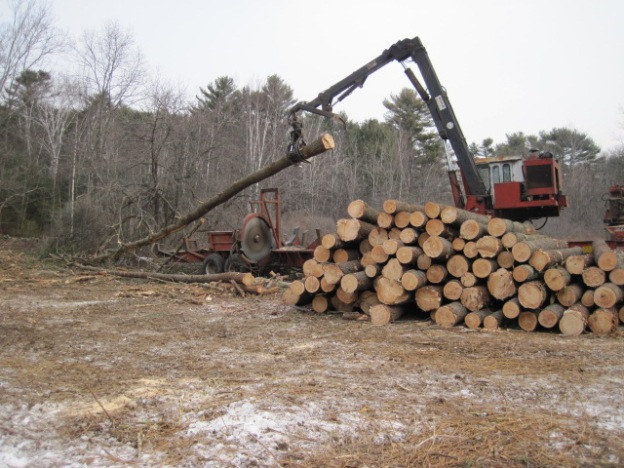 At Brave Boat Harbor and Upper Wells, trees had grown too mature to provide habitat for cottontails. Their leafy crowns cut off sunlight, causing ground-covering food plants to die off. Leaving plenty of other middle-aged forest, trees were harvested on less than 5 percent of the forest as part of an effort to manage young forest across 25 acres. The area is now growing into a dense thicket and becoming great habitat for cottontails and other wildlife, such as gray catbird, a type of shrubland bird. Credit: USFWS