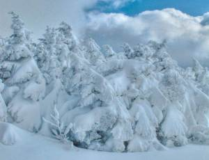 Jon Elder Robison, 2011.  An unusually early Nor'easter hit the Northeast over Halloween.  Heavy snow weighed down trees that had not lost their leaves for the season, adding extra weight.  Twelve states lost power for most of a week.