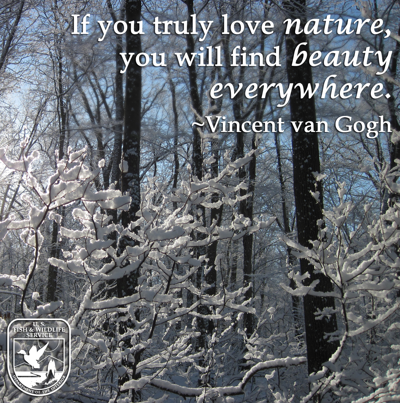 """If you truly love nature, you will find beauty everywhere."""